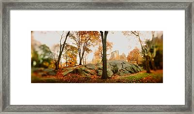 Trees In A Park, Central Park Framed Print by Panoramic Images