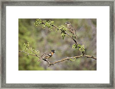 Usa, Arizona, Santa Rita Mountains Framed Print by Jaynes Gallery
