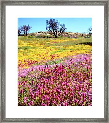 Usa, California, Cuyamaca Rancho State Framed Print