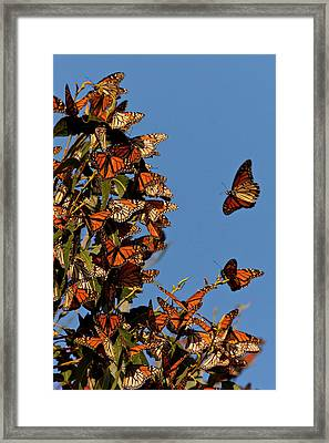 Usa, California, San Luis Obispo County Framed Print