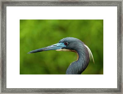 Usa, Florida, Gatorland Framed Print