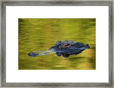 Usa, Florida, St Framed Print by Jaynes Gallery