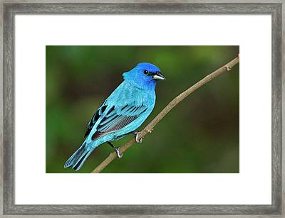 Usa, Texas, South Padre Island Framed Print by Jaynes Gallery