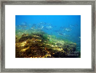 White Bream. Framed Print by Alexandr  Malyshev