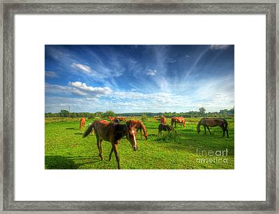 Wild Horses On The Field Framed Print