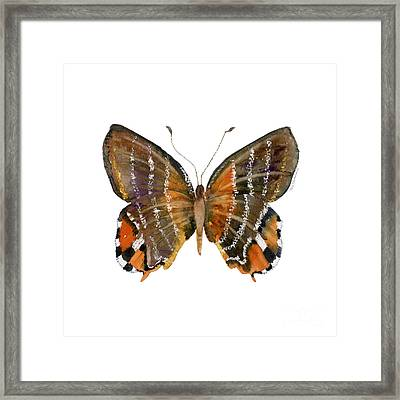 60 Euselasia Butterfly Framed Print by Amy Kirkpatrick
