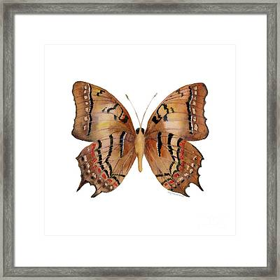 62 Galaxia Butterfly Framed Print