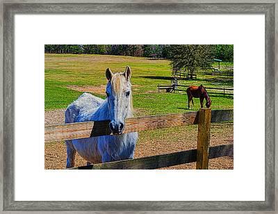 6520-217 Framed Print