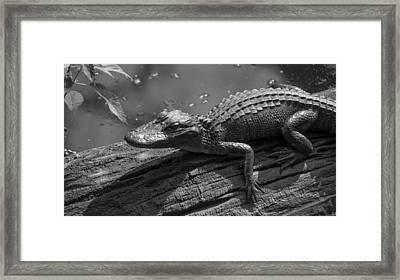 Untitled Framed Print by Bill Martin