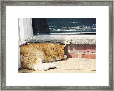 #665 03 Catnap  Framed Print by Robin Lee Mccarthy Photography