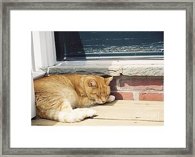 #665 03 Catnap  Framed Print