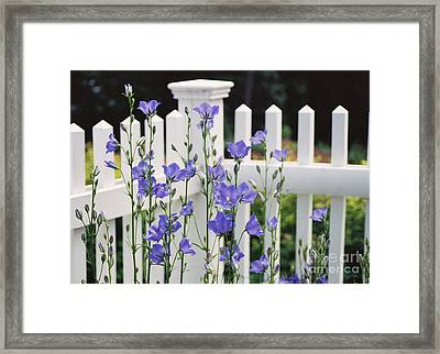 #665 11 Fenced In Framed Print by Robin Lee Mccarthy Photography