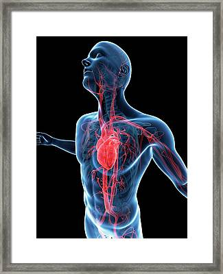 Human Vascular System Framed Print by Sebastian Kaulitzki