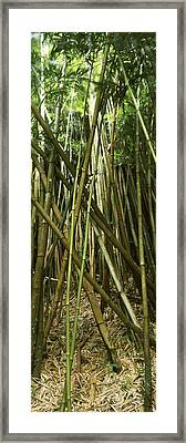 Bamboo Forest, Oheo Gulch, Seven Sacred Framed Print by Panoramic Images