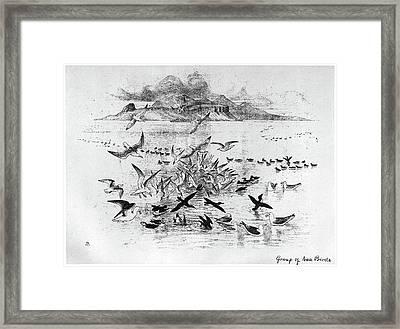 Blackburn Birds, 1895 Framed Print