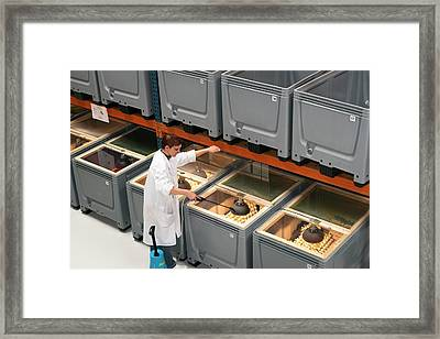 Breeding Insects For Human Consumption Framed Print