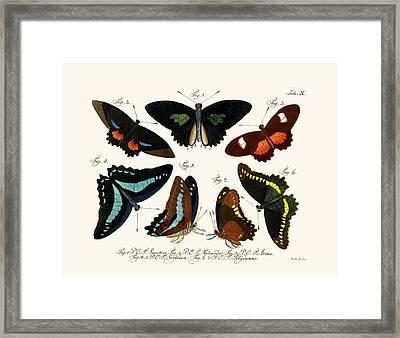 Butterflies Framed Print by Splendid Art Prints