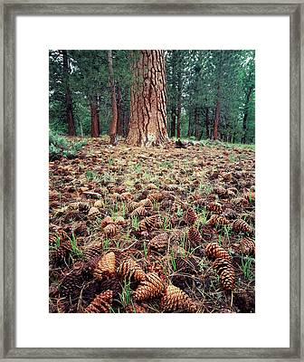 California, Sierra Nevada Mountains Framed Print