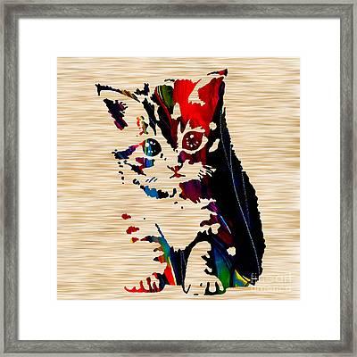 Cat Kitten Framed Print