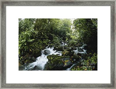Cloud Forest, Costa Rica Framed Print