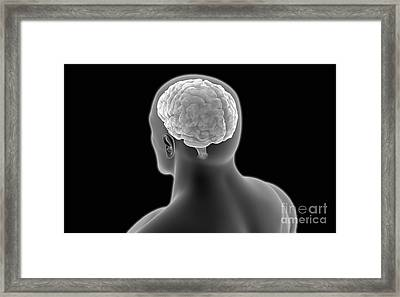 Conceptual Image Of Human Brain Framed Print by Stocktrek Images