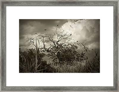 7 Crows Framed Print