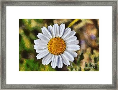 Daisy Framed Print by George Atsametakis