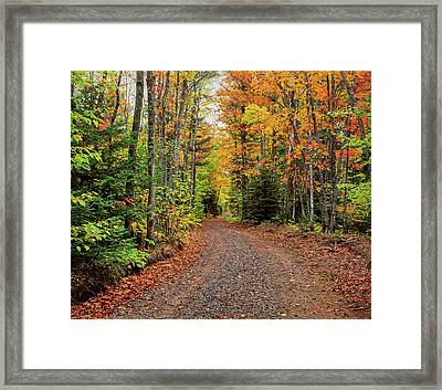 Dirt Road Passing Through A Forest Framed Print