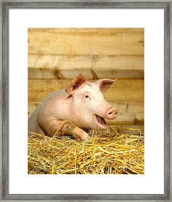 A Domestic Pig Framed Print by Hans Reinhard