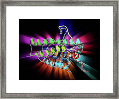 Erythropoietin Hormone Molecule Framed Print