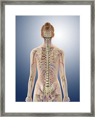 Female Anatomy, Artwork Framed Print by Science Photo Library