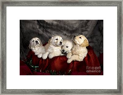 Festive Puppies Framed Print by Angel  Tarantella