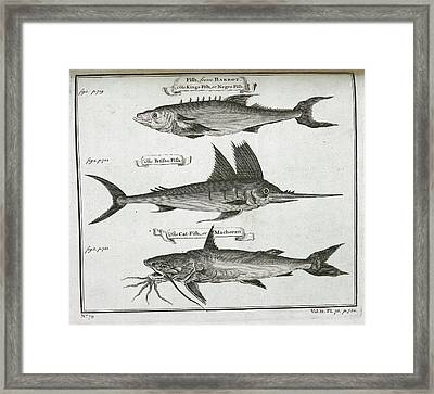 Fish Framed Print by British Library