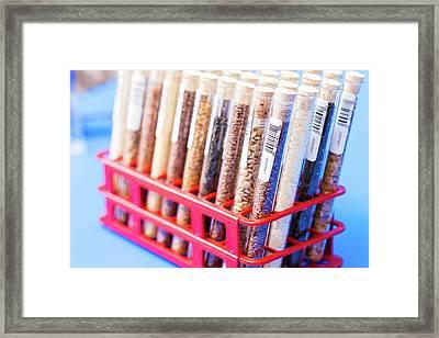 Food Samples In Test Tubes Framed Print by Wladimir Bulgar