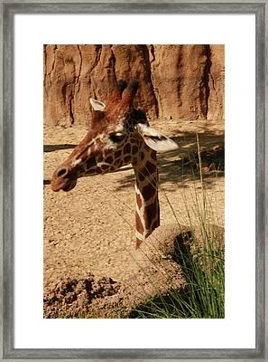 Giraff Framed Print by Tinjoe Mbugus