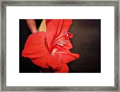 Gladiola  Framed Print by Cathie Tyler
