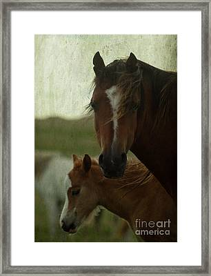 Horses Framed Print by Angel Ciesniarska