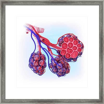 Human Alveoli Framed Print by Pixologicstudio