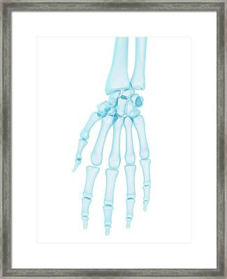 Human Hand Bones Framed Print by Sciepro