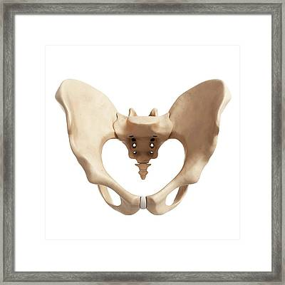 Human Hip Bone Framed Print