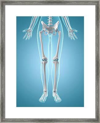 Human Leg Bones Framed Print