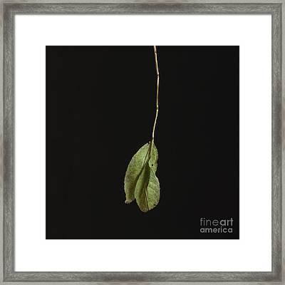 Leaf Framed Print by Bernard Jaubert