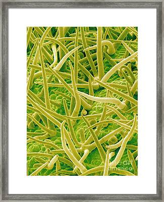 Sem Of Leaf Surface Framed Print
