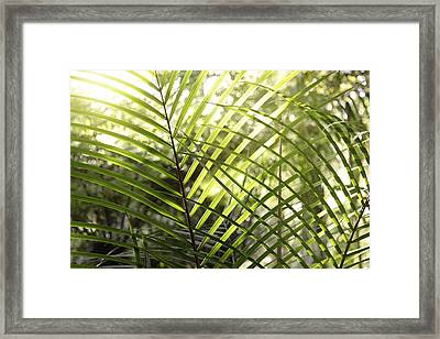Leaves Framed Print by Les Cunliffe