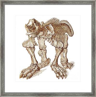 Megatherium, Cenozoic Mammal Framed Print by Science Source