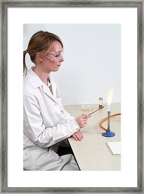 Microbiology Culture Preparation Framed Print
