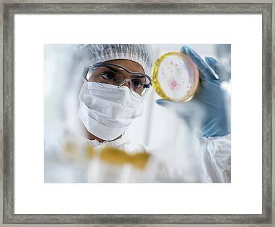 Microbiology Framed Print by Tek Image
