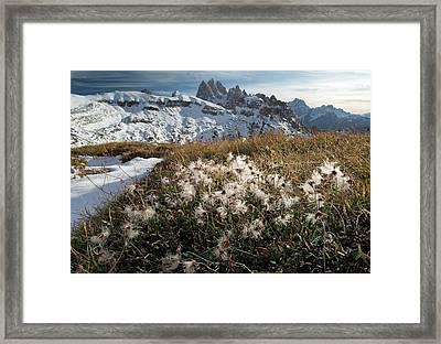 Mountain Avens (dryas Octopetala) Framed Print by Bob Gibbons