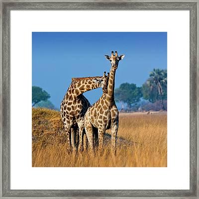 Okavango Delta, Botswana Framed Print