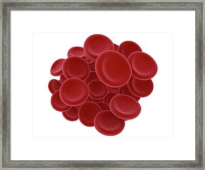Red Blood Cells Framed Print by Jesper Klausen / Science Photo Library